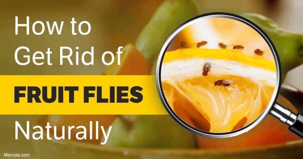 Μυγάκια στην κουζίνα; Πώς μπορούμε να απαλλαγούμε από αυτά με φυσικό τρόπο;